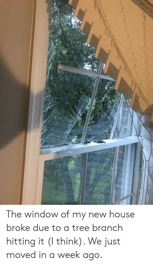 Astonishing The Window Of My New House Broke Due To A Tree Branch Download Free Architecture Designs Itiscsunscenecom