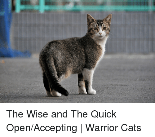 The Wise And The Quick Openaccepting Warrior Cats Cats Meme On Meme