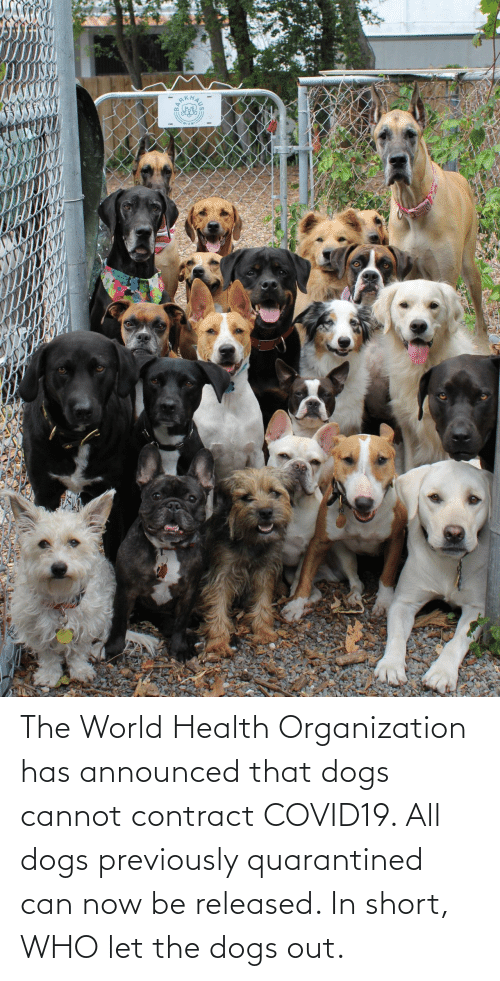 Dogs, Who Let the Dogs Out, and World: The World Health Organization has announced that dogs cannot contract COVID19. All dogs previously quarantined can now be released. In short, WHO let the dogs out.