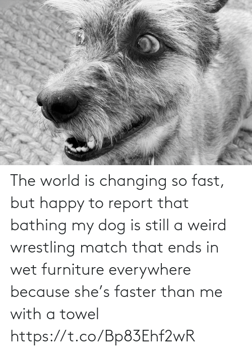 Memes, Weird, and Wrestling: The world is changing so fast, but happy to report that bathing my dog is still a weird wrestling match that ends in wet furniture everywhere because she's faster than me with a towel https://t.co/Bp83Ehf2wR