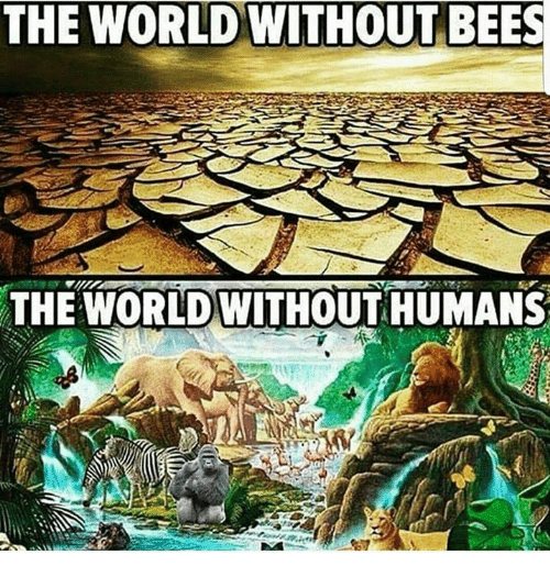 Memes World And Humanity THE WORLD WITHOUT BEES HUMANS A