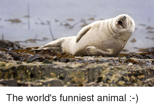 Animals Anime And Funny The Worlds Funniest Animal