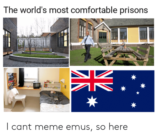 Comfortable, Meme, and Can: The world's most comfortable prisons  N2 I cant meme emus, so here