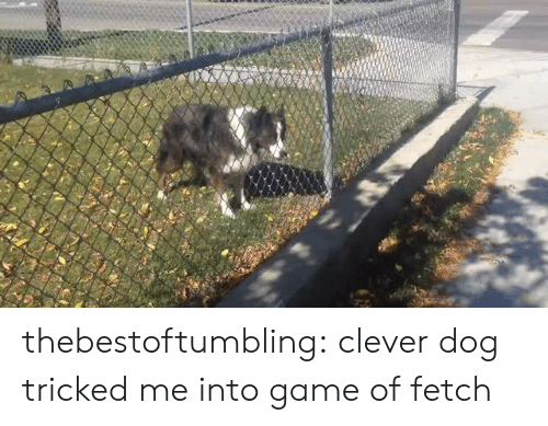 Target, Tumblr, and Blog: thebestoftumbling:  clever dog tricked me into game of fetch
