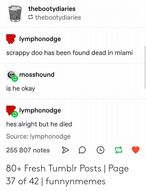 Fresh, Tumblr, and Okay: thebootydiaries  thebootydiaries  lymphonodge  scrappy doo has been found dead in miami  mosshound  is he okay  lymphonodge  hes alright but he died  Source: lymphonodge  255 807 notes 80+ Fresh Tumblr Posts   Page 37 of 42   funnynmemes