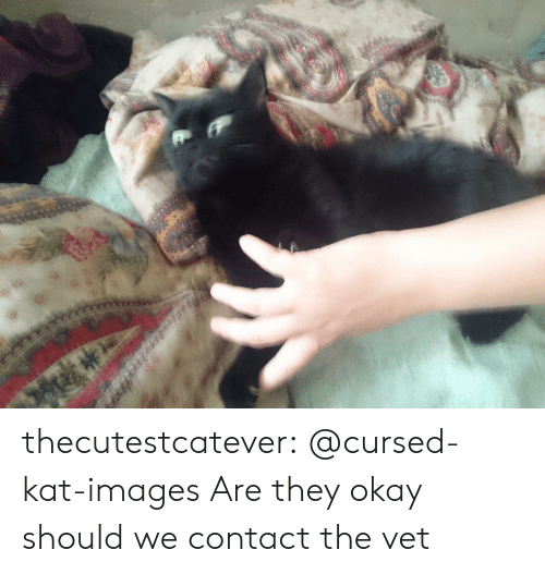 Tumblr, Blog, and Images: thecutestcatever:  @cursed-kat-images   Are they okay should we contact the vet