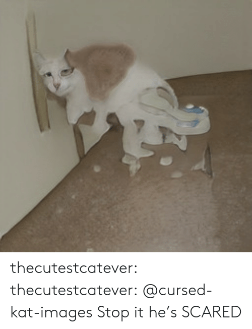 Tumblr, Blog, and Images: thecutestcatever:  thecutestcatever:    @cursed-kat-images   Stop it he's SCARED