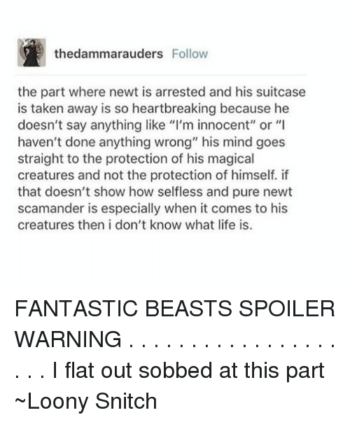 """Memes, Snitch, and Taken: thedammarauders Follow  the part where newt is arrested and his suitcase  is taken away is so heartbreaking because he  doesn't say anything like """"I'm innocent"""" or """"I  haven't done anything wrong"""" his mind goes  straight to the protection of his magical  creatures and not the protection of himself. if  that doesn't show how selfless and pure newt  scamander is especially when it comes to his  creatures then i don't know what life is. FANTASTIC BEASTS SPOILER WARNING  . . . . . . . . . . . . . . . . . . . . I flat out sobbed at this part  ~Loony Snitch"""