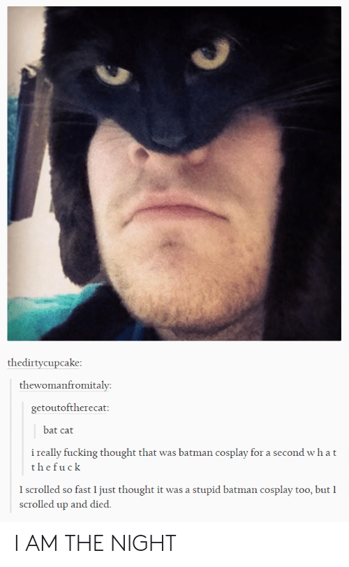 Batman, Fucking, and Cosplay: thedirtycupcake  thewomanfromitaly  getoutoftherecat  bat cat  i really fucking thought that was batman cosplay for a second wh a t  thefuck  I scrolled so fast 1 just thought it was a stupid batman cosplay too, but I  scrolled up and died. I AM THE NIGHT