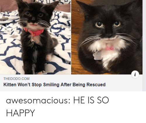 Tumblr, Blog, and Happy: THEDODO.COM  Kitten Won't Stop Smiling After Being Rescued awesomacious:  HE IS SO HAPPY