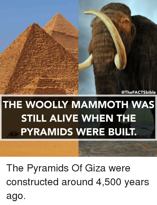Alive, Memes, and 🤖: @TheFACTSbible  THE WOOLLY MAMMOTH WAS  STILL ALIVE WHEN THE  PYRAMIDS WERE BUILT. The Pyramids Of Giza were constructed around 4,500 years ago.