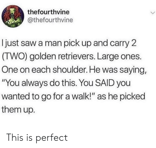"""Saw, Wanted, and One: thefourthvine  @thefourthvine  just saw a man pick up and carry 2  (TWO) golden retrievers. Large ones.  One on each shoulder. He was saying,  """"You always do this. You SAID you  wanted to go for a walk!"""" as he picked  them up. This is perfect"""