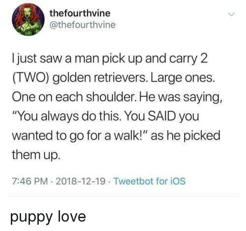 "Love, Saw, and Puppy: thefourthvine  @thefourthvine  ljust saw a man pick up and carry 2  (TWO) golden retrievers. Large ones.  One on each shoulder. He was saying,  ""You always do this. You SAID you  wanted to go for a walk!"" as he picked  them up.  7:46 PM 2018-12-19 Tweetbot for iOS puppy love"