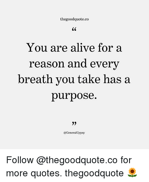 Alive, Memes, and Quotes: thegoodquote.co  CS  You are alive for a  reason and every  breath you take has a  purpose.  @GeneralGypsy Follow @thegoodquote.co for more quotes. thegoodquote 🌻