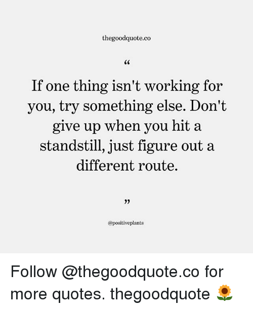 Memes, Quotes, and Something Else: thegoodquote.co  If one thing isn't working for  you, try something else. Don't  give up when you hit a  standstill, just figure out a  different route.  0)  @positiveplants Follow @thegoodquote.co for more quotes. thegoodquote 🌻