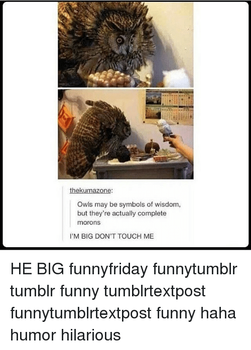 Memes, 🤖, and Owl: thekumazone:  Owls may be symbols of wisdom,  but they're actually complete  morons  I'M BIG DON'T TOUCH ME HE BIG funnyfriday funnytumblr tumblr funny tumblrtextpost funnytumblrtextpost funny haha humor hilarious