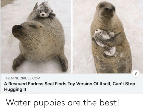 Puppies, Best, and Seal: THEMINDCIRCLE.COM  A Rescued Earless Seal Finds Toy Version Of Itself, Can't Stop  HuggingIt Water puppies are the best!