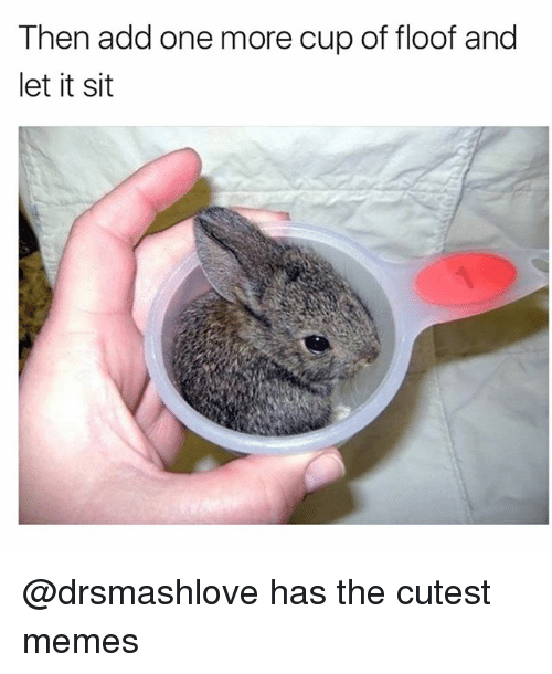 Funny, Memes, and Add: Then add one more cup of floof and  let it sit @drsmashlove has the cutest memes