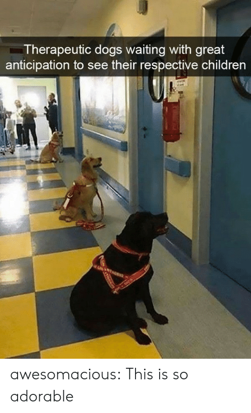 Children, Dogs, and Tumblr: Therapeutic dogs waiting with great  anticipation to see their respective children awesomacious:  This is so adorable