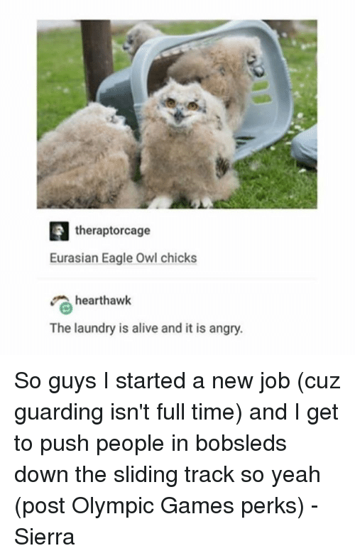 Alive, Laundry, and Memes: theraptorcage  Eurasian Eagle Owl chicks  hearthawk  The laundry is alive and it is angry. So guys I started a new job (cuz guarding isn't full time) and I get to push people in bobsleds down the sliding track so yeah (post Olympic Games perks) - Sierra