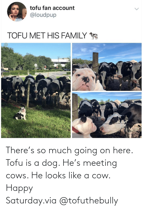 Instagram, Target, and Happy: There's so much going on here. Tofu is a dog. He's meeting cows. He looks like a cow. Happy Saturday.via @tofuthebully