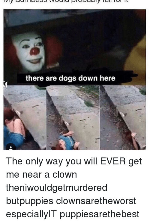 there are dogs down here the only way you will 18746065 there are dogs down here the only way you will ever get me near a,Get Down Here Meme