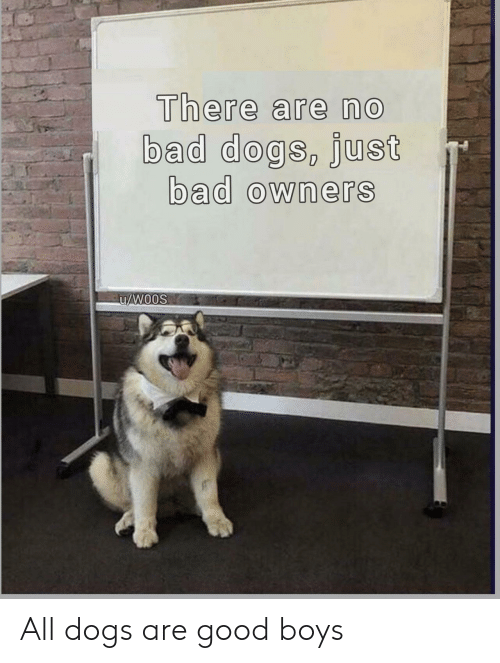 Bad, Dogs, and Good: There are no  bad dogs, Just  bad owners All dogs are good boys