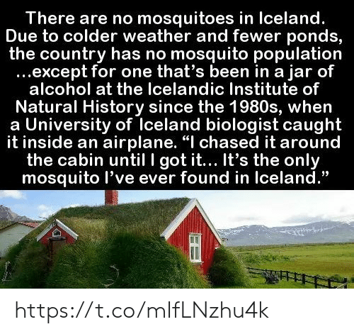"""Airplane, Alcohol, and History: There are no mosquitoes in Iceland.  Due to colder weather and fewer ponds,  the country has no mosquito population  ...except for one that's been in a jar of  alcohol at the Icelandic Institute of  Natural History since the 1980s, when  a University of Iceland biologist caught  it inside an airplane. """"I chased it around  the cabin until I got it... It's the only  mosquito l've ever found in Iceland."""" https://t.co/mIfLNzhu4k"""