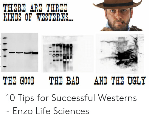 Bad, Life, and Ugly: THERE ARZ THR23  KINDS OF WESTERNS...  THE GOOD  THE BAD  AND THE UGLY 10 Tips for Successful Westerns - Enzo Life Sciences