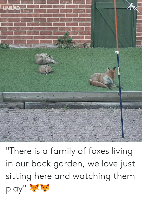 "Dank, Family, and Love: ""There is a family of foxes living in our back garden, we love just sitting here and watching them play"" 🦊🦊"