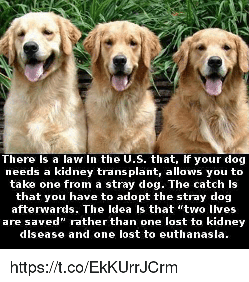 "Memes, 🤖, and Kidney: There is a law in the U.S. that, if your dog  needs a kidney transplant, allows you to  take one from a stray dog. The catch is  that you have to adopt the stray dog  afterwards. The idea is that ""two lives  are saved"" rather than one lost to kidney  disease and one lost to euthanasia. https://t.co/EkKUrrJCrm"