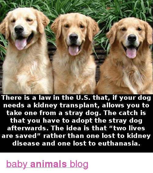 "Animals, Target, and Tumblr: There is a law in the U.S. that, if your dog  needs a kidney transplant, allows you to  take one from a stray dog. The catch is  that you have to adopt the stray dog  are saved"" rather than one lost to kidney  disease and one lost to euthanasia. <p><a href=""http://babyanimalgifs.tumblr.com/"" target=""_blank"">baby <b>animals</b> blog</a></p>"