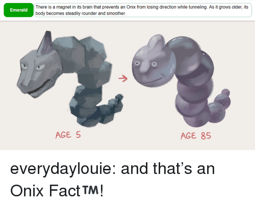 Tumblr, Blog, and Brain: There is a magnet in its brain that prevents an Onix from losing direction while tunneling. As it grows older, its  body becomes steadily rounder and smoother  Emerald  AGE 5  AGE 85 everydaylouie: and that's an Onix Fact™️!