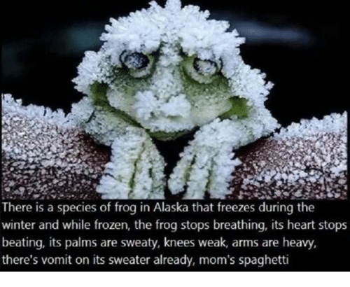 Frozen, Moms, and Winter: There is a species of frog in Alaska that freezes during the  winter and while frozen, the frog stops breathing, its heart stops  beating, its palms are sweaty, knees weak, arms are heavy,  there's vomit on its sweater already, mom's spaghetti
