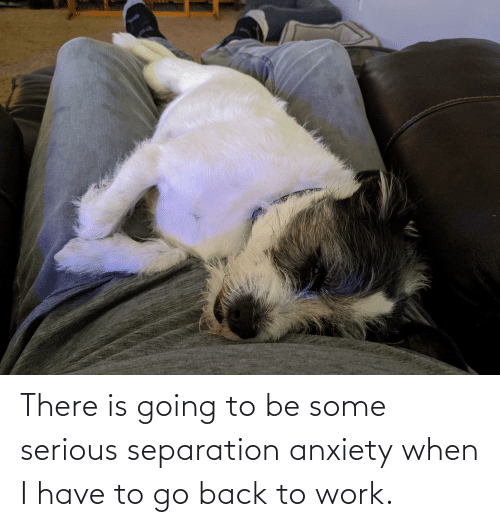 Work, Anxiety, and Back: There is going to be some serious separation anxiety when I have to go back to work.
