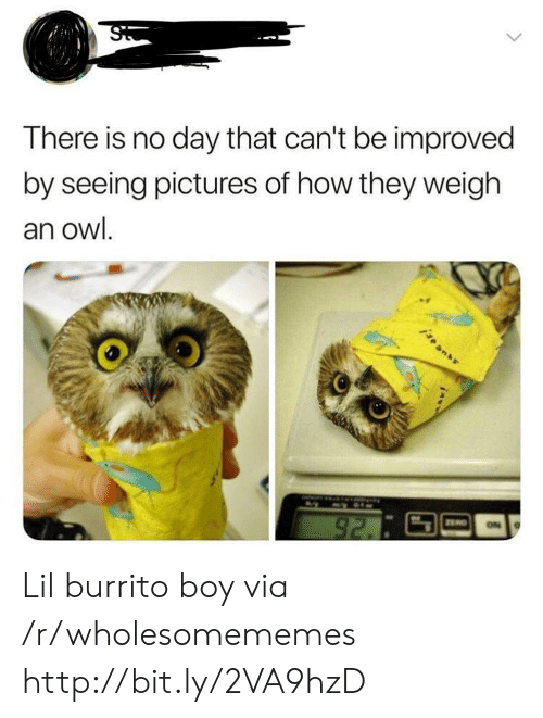 Http, Pictures, and Boy: There is no day that can't be improved  by seeing pictures of how they weigh  an owl.  igean  92. Lil burrito boy via /r/wholesomememes http://bit.ly/2VA9hzD