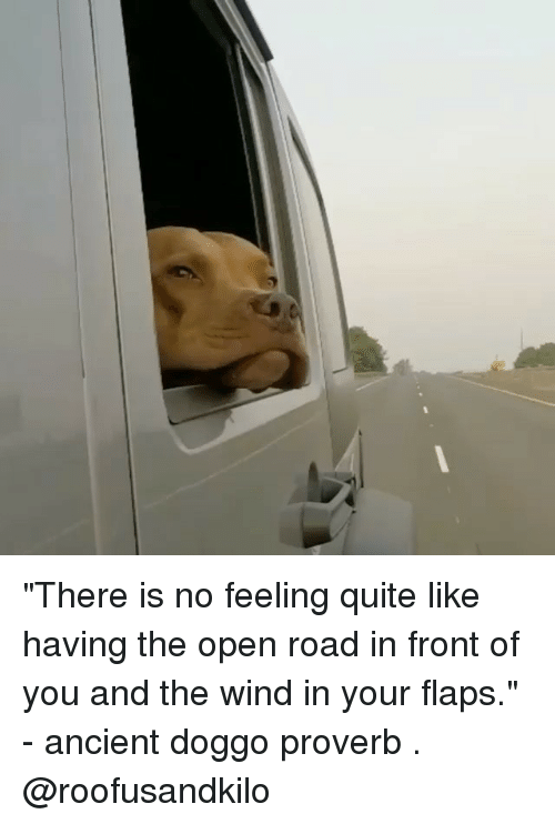 "Memes, Quite, and Ancient: ""There is no feeling quite like having the open road in front of you and the wind in your flaps."" - ancient doggo proverb . @roofusandkilo"