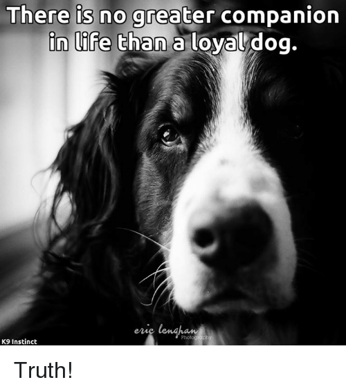 Life, Memes, and Truth: There is no greater companion  in life than a loyal dog.  K9 Instinct Truth!