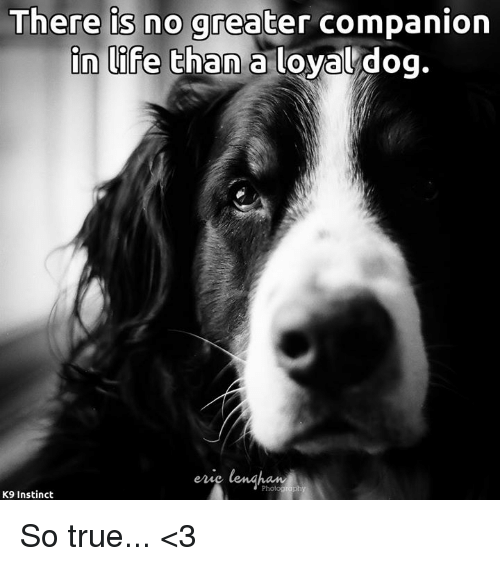 Life, Memes, and True: There is no greater companion  in life than a loyal dog.  Photoataph  K9 Instinct So true... <3