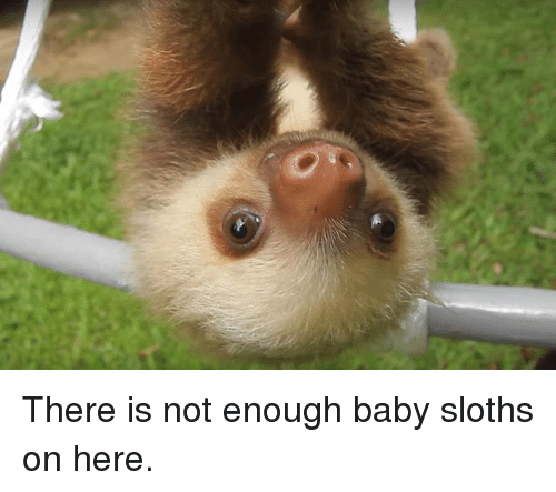 25 best memes about baby sloths baby sloths memes