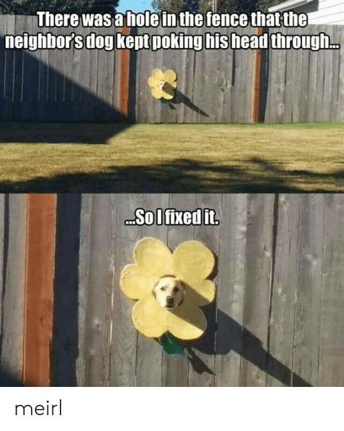 Head, Neighbors, and MeIRL: There was a holein the fence that the  neighbor's dog kept poking his head through.  Sol fixed it meirl