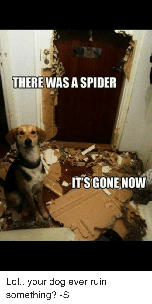 There Was A Spider Its Gone Now