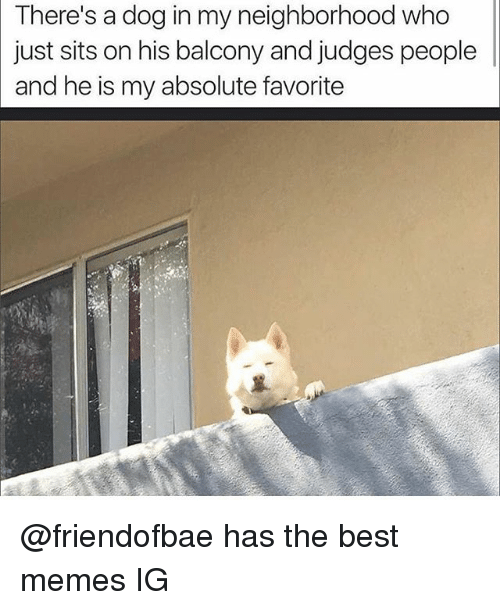 Funny, Memes, and Best: There's a dog in my neighborhood who  just sits on his balcony and judges people  and he is my absolute favorite @friendofbae has the best memes IG