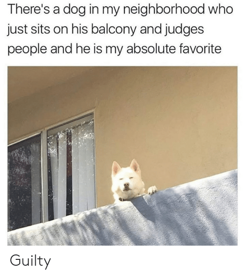 Dank, 🤖, and Dog: There's a dog in my neighborhood who  just sits on his balcony and judges  people and he is my absolute favorite Guilty