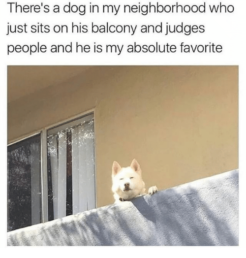 Dog, Who, and People: There's a dog in my neighborhood who  just sits on his balcony and judges  people and he is my absolute favorite