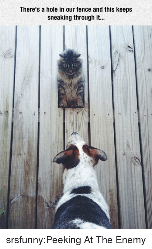 Tumblr, Blog, and Http: There's a hole in our fence and this keeps  sneaking through it... srsfunny:Peeking At The Enemy