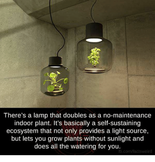 There 39 s a lamp that doubles as a no maintenance indoor for No maintenance indoor plants