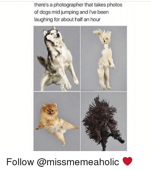 Dogs, Memes, and Been: there's a photographer that takes photos  of dogs mid jumping and i've been  laughing for about half an hour Follow @missmemeaholic ❤️