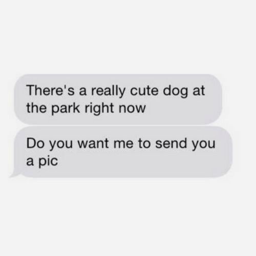 Cute, Dog, and Park: There's a really cute dog at  the park right now  Do you want me to send you  a pic