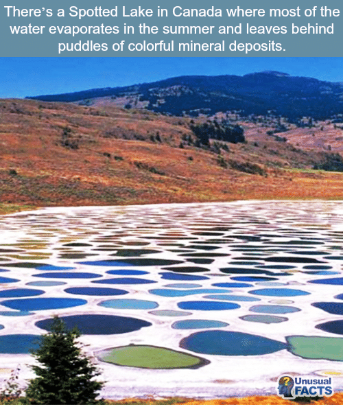 There's A Spotted Lake In Canada Where Most Of The Water